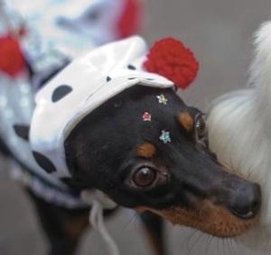 carnival dog (vancouversun.com)