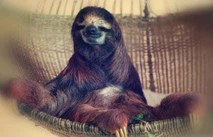 sloth7