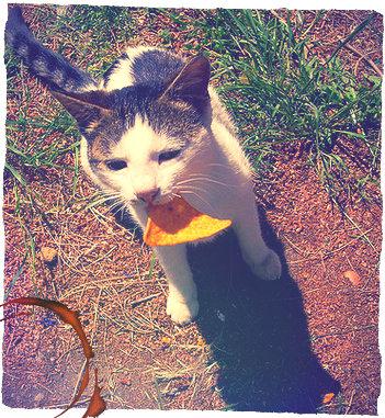 cat-nacho-mod