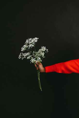 person holding white flowers in black background